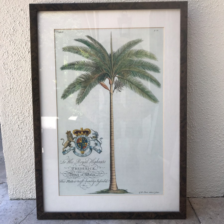 Framed Palm Tree Lithograph by G.D. Ehret